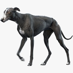 realistic greyhound animations 3 model