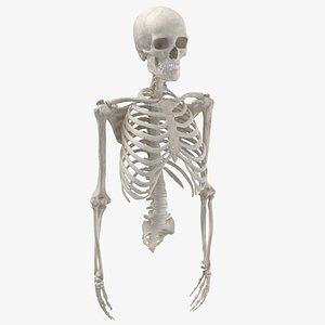 3D human rib cage spine