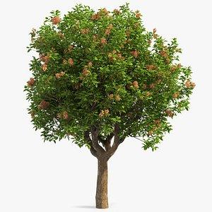 pistachio tree nuts 3D model