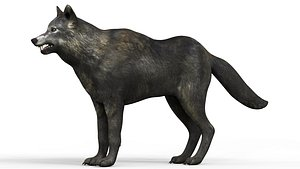 3D Black Wolf With PBR Textures