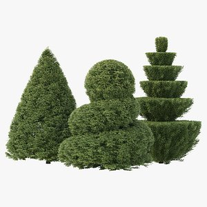 3D 3 Shaped Yew Bush 03