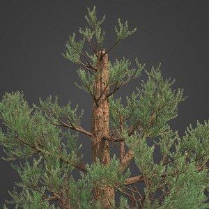3D 2021 PBR Western Juniper Collection - Juniperus Occidentalis model