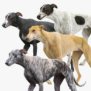 3D greyhound hound fur model