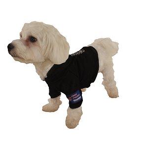 dog standing dress model