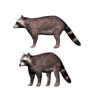 3D fully rigged brown raccoon model