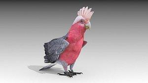 cockatoo parrot 3D