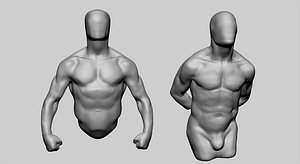 torso studies anatomy 3D model