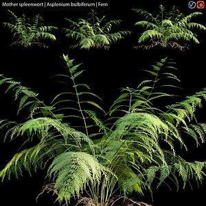3D Mother spleenwort - Asplenium bulbiferum - Fern 01