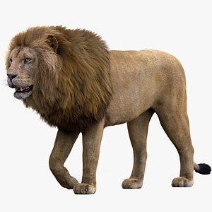 Lion Rigged FUR 1 3D