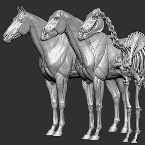 Horse Textured  VFX MUSCLE SIMULATION model