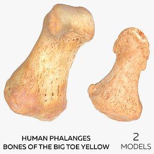Human Phalanges Bones of the Big Toe Yellow - 2 models 3D