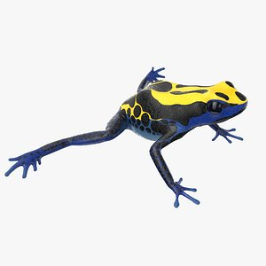 dyeing poison dart frog 3D model