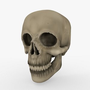 skull blender cycles 3D