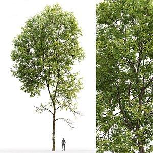tree ash-tree model