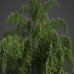 birch tree nature 3D model