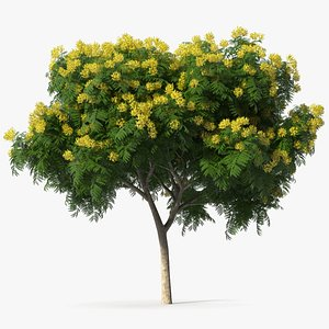 yellow flame tree flowers 3D model