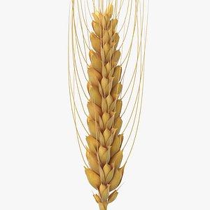3D model wheat branch 02