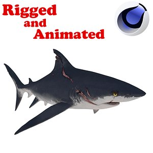 3D Teen Shark Rigged and Animated