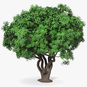 3D model tree foliage rhododendron