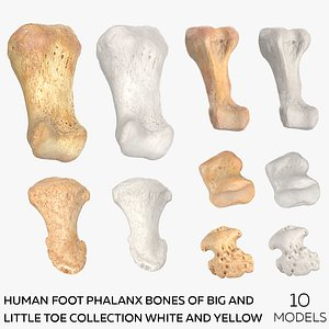 3D Human Foot Phalanx Bones of Big and Little Toe Collection White and Yellow - 10 models