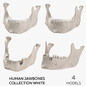 Human Jawbones Collection White - 4 models model