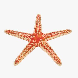 3D necklace starfish model