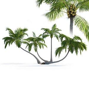 Palm trees Vol 1 3D