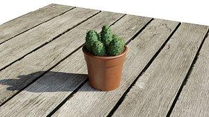 3D cactus model