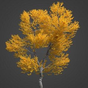 2021 PBR Black Poplar Collection - Populus Nigra 3D model