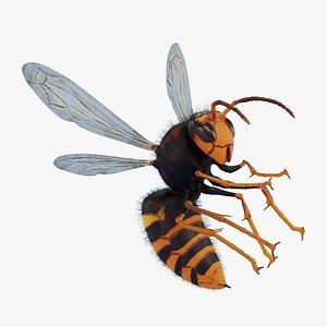 3D Asian Giant Hornet Rigged