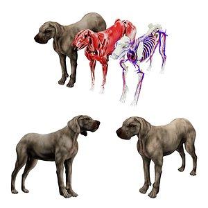 dog anatomy internal organs 3D model