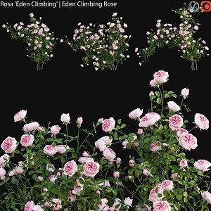 3D Rosa Eden Climbing - rose 01 model