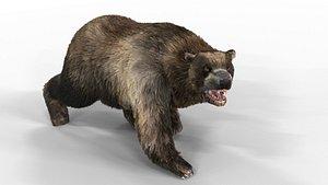 3D Black Bear Animated Fur