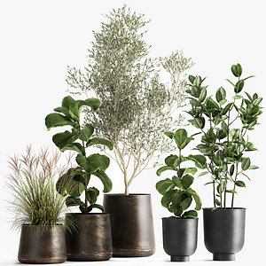 Houseplants in a flowerpot for the interior 1029 model