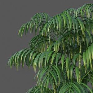 XfrogPlants Parlour Palm - Chamaedora Elegans 3D model