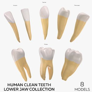 Human Clean Teeth Lower Jaw Collection -  8 models 3D