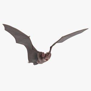 3D Vampire Bat Rigged