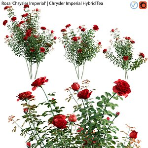 Rosa Chrysler Imperial - Rose 02 3D model