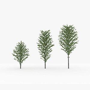 tree planting katsura lod2 3D model