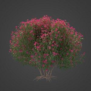2021 PBR Oleander Collection - Nerium Oleander 3D model