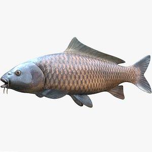 Common Carp Wild Variety model