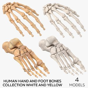 Human Hand and Foot Bones Collection White and Yellow - 4 models 3D model