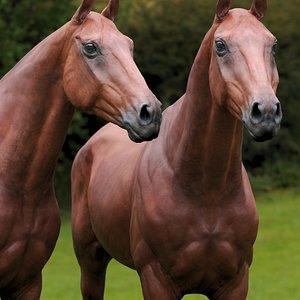 3D model animal horse mammal