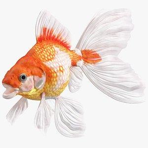 3D White Goldfish Aquarium Fish Rigged for Cinema 4D model