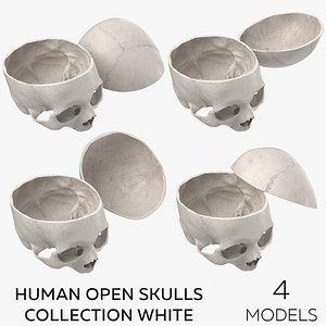 3D Human Open Skulls Collection White - 4 models model