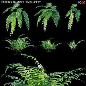 3D Phlebodium aureum - fern 01