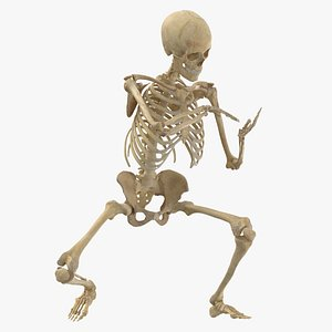 3D real human female skeleton model
