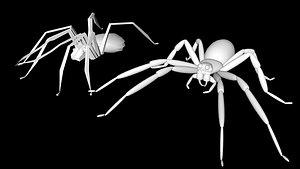 3D tarantula insect spider model