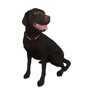 dog sitting 3D
