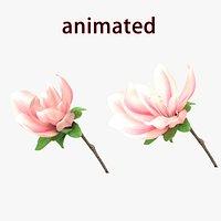 yulan flower bloom blossom